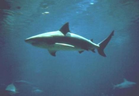 Adventures in open-water swimming II: Electric shark-a-loo