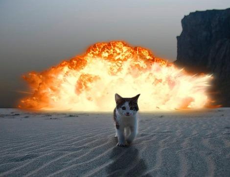 cat-explosion
